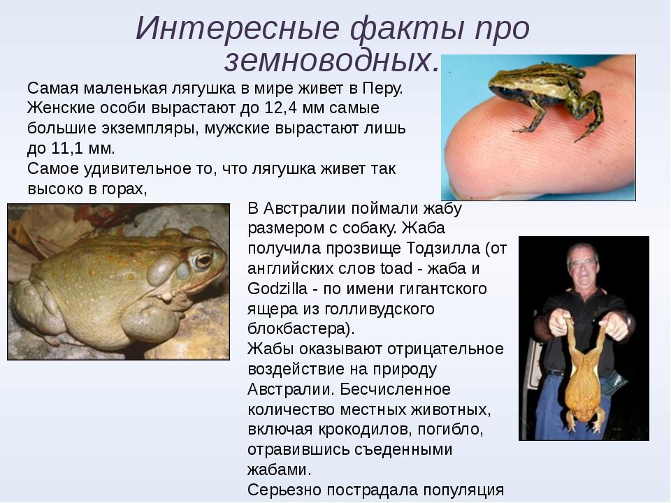 Интересные факты про земноводных. Самая маленькая лягушка в мире живет в Перу...
