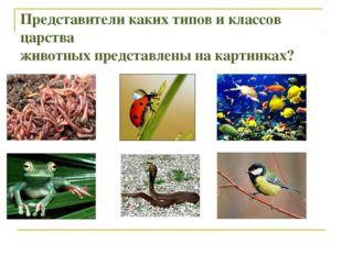 Представители каких типов и классов царства животных представлены на картинках?