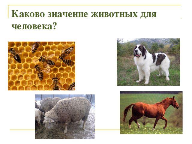 Каково значение животных для человека?