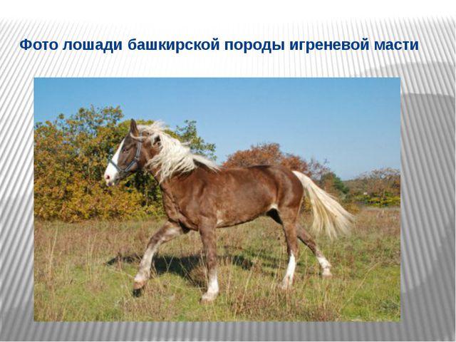 Фото лошади башкирской породы игреневой масти