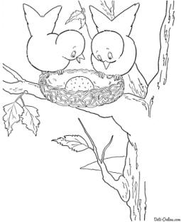 Раскраска Птичье гнездо на дерево