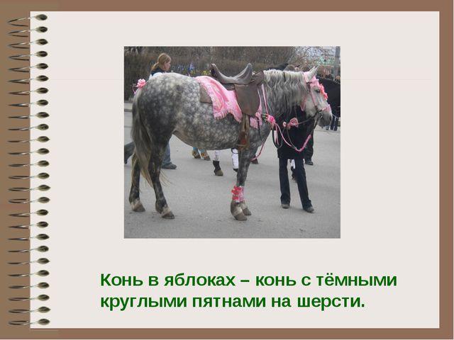 Конь в яблоках – конь с тёмными круглыми пятнами на шерсти.