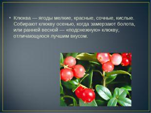 Клюква — ягоды мелкие, красные, сочные, кислые. Собирают клюкву осенью, когда