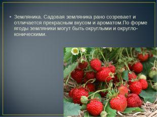 Земляника. Садовая земляника рано созревает и отличается прекрасным вкусом и