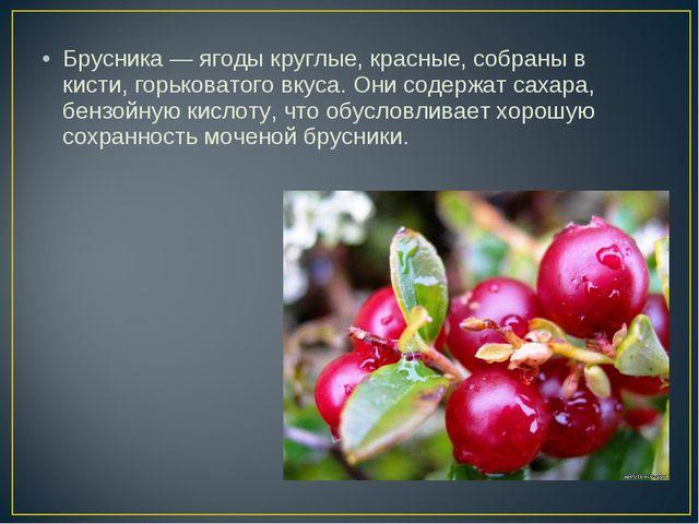 Брусника — ягоды круглые, красные, собраны в кисти, горьковатого вкуса. Они с...