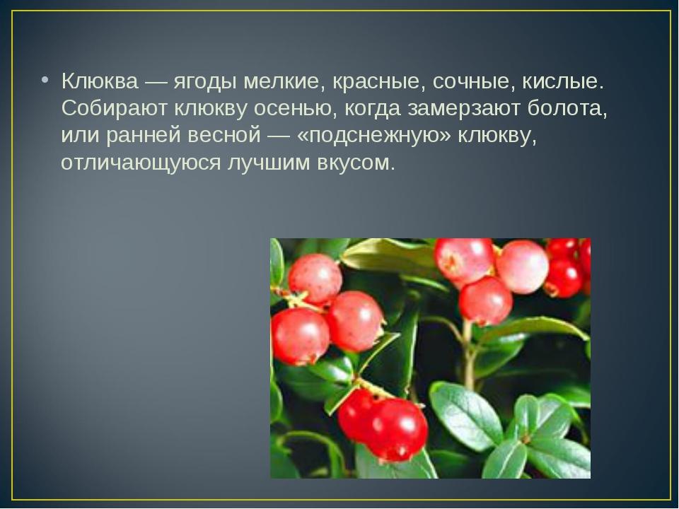 Клюква — ягоды мелкие, красные, сочные, кислые. Собирают клюкву осенью, когда...