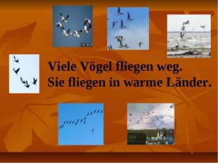 Viele Vögel fliegen weg. Sie fliegen in warme Länder.