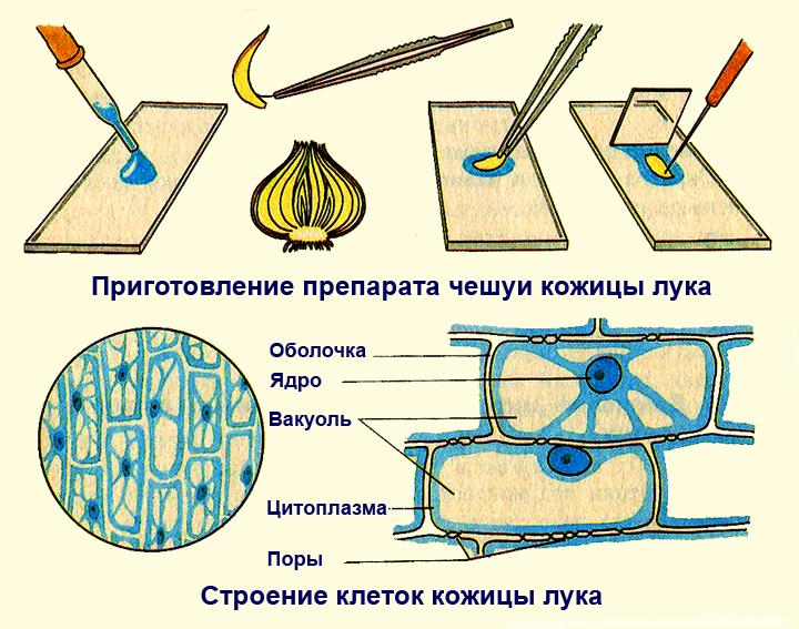 http://fs00.infourok.ru/images/doc/312/311793/hello_html_3c850112.jpg