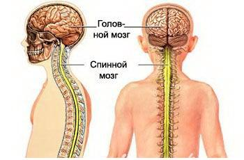 http://www.medicinformer.ru/images/books/29/image001.jpg