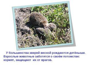 У большинства зверей весной рождаются детёныши. Взрослые животные заботятся