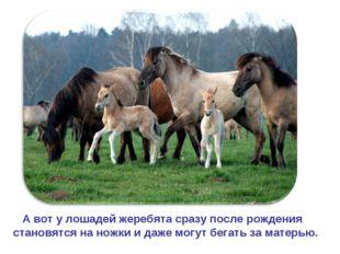 А вот у лошадей жеребята сразу после рождения становятся на ножки и даже мог