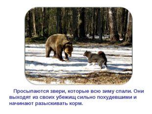 Просыпаются звери, которые всю зиму спали. Они выходят из своих убежищ сильн