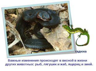 Важные изменения происходят в весной в жизни других животных: рыб, лягушек и