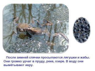 После зимней спячки просыпаются лягушки и жабы. Они громко урчат в пруду, ре