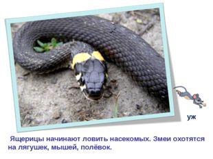 Ящерицы начинают ловить насекомых. Змеи охотятся на лягушек, мышей, полёвок.