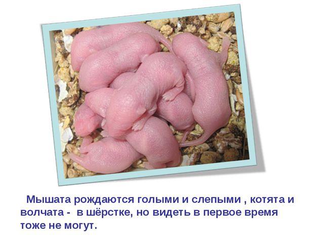 Мышата рождаются голыми и слепыми , котята и волчата - в шёрстке, но видеть...