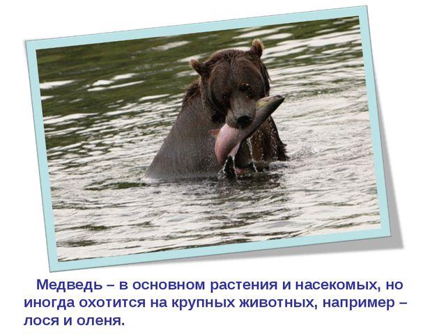 Медведь – в основном растения и насекомых, но иногда охотится на крупных жив...