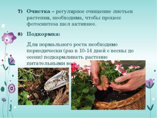 Очистка – регулярное очищение листьев растения, необходима, чтобы процесс фот