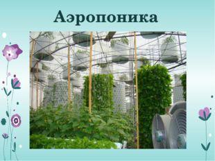 У растения должно быть постоянное место. Нельзя переставлять его с места на м