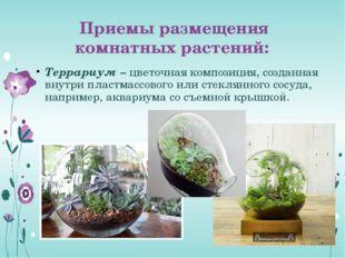Приемы размещения комнатных растений: Террариум – цветочная композиция, созда