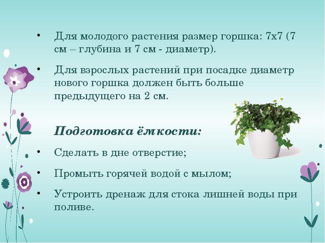 Для молодого растения размер горшка: 7х7 (7 см – глубина и 7 см - диаметр). Д...