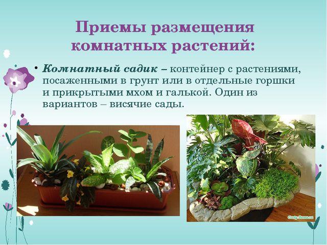 Приемы размещения комнатных растений: Комнатный садик – контейнер с растениям...