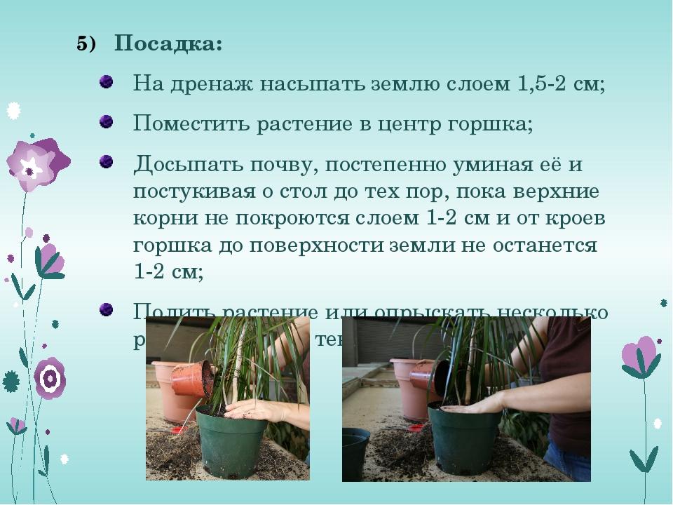 Посадка: На дренаж насыпать землю слоем 1,5-2 см; Поместить растение в центр...