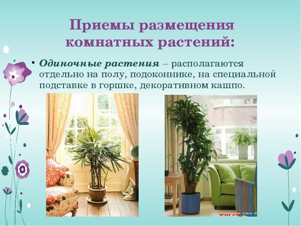 Приемы размещения комнатных растений: Одиночные растения – располагаются отде...