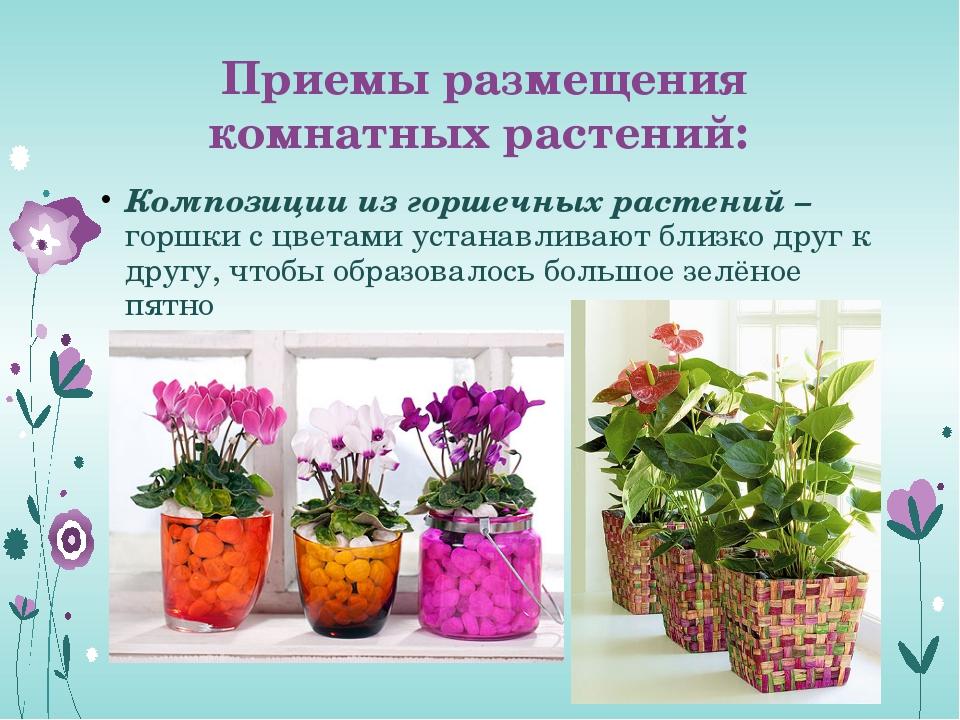 Приемы размещения комнатных растений: Композиции из горшечных растений – горш...