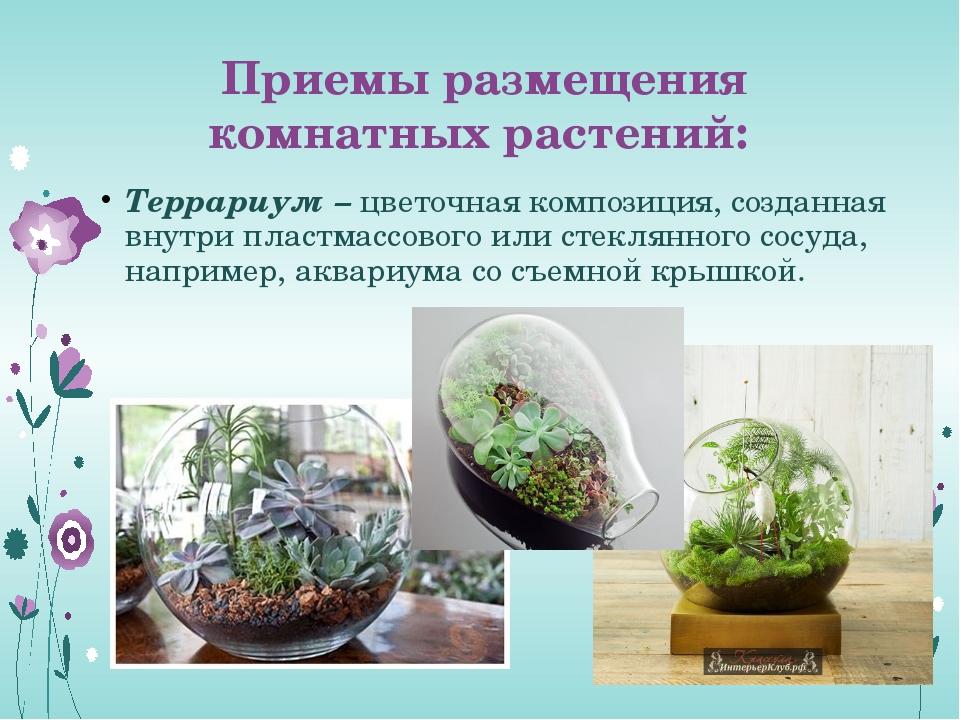 Приемы размещения комнатных растений: Террариум – цветочная композиция, созда...