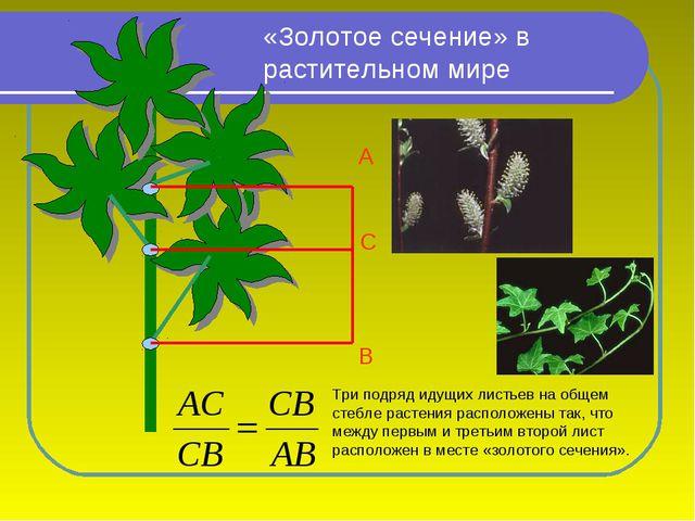 Три подряд идущих листьев на общем стебле растения расположены так, что между...