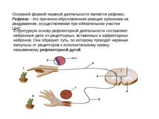 Основной формой нервной деятельности является рефлекс. Рефлекс - это причинно