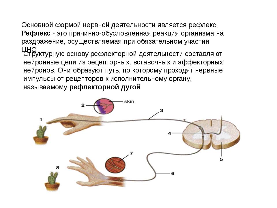 Основной формой нервной деятельности является рефлекс. Рефлекс - это причинно...