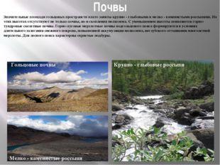 Почвы Значительные площади гольцовых пространств плато заняты крупно - глыбов