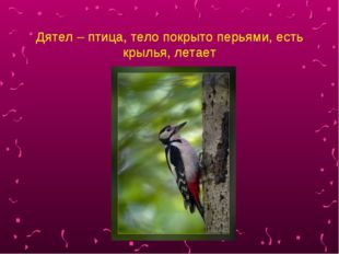 Дятел – птица, тело покрыто перьями, есть крылья, летает
