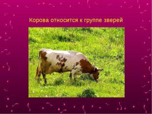 Корова относится к группе зверей