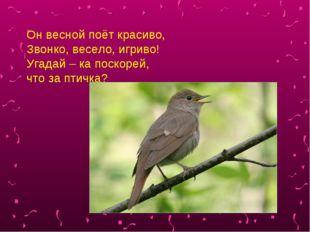 Он весной поёт красиво, Звонко, весело, игриво! Угадай – ка поскорей, что за