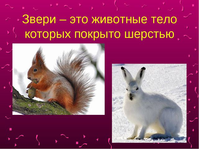 Звери – это животные тело которых покрыто шерстью