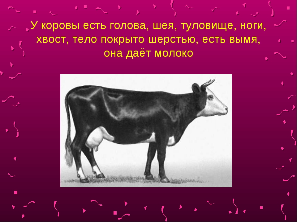 У коровы есть голова, шея, туловище, ноги, хвост, тело покрыто шерстью, есть...