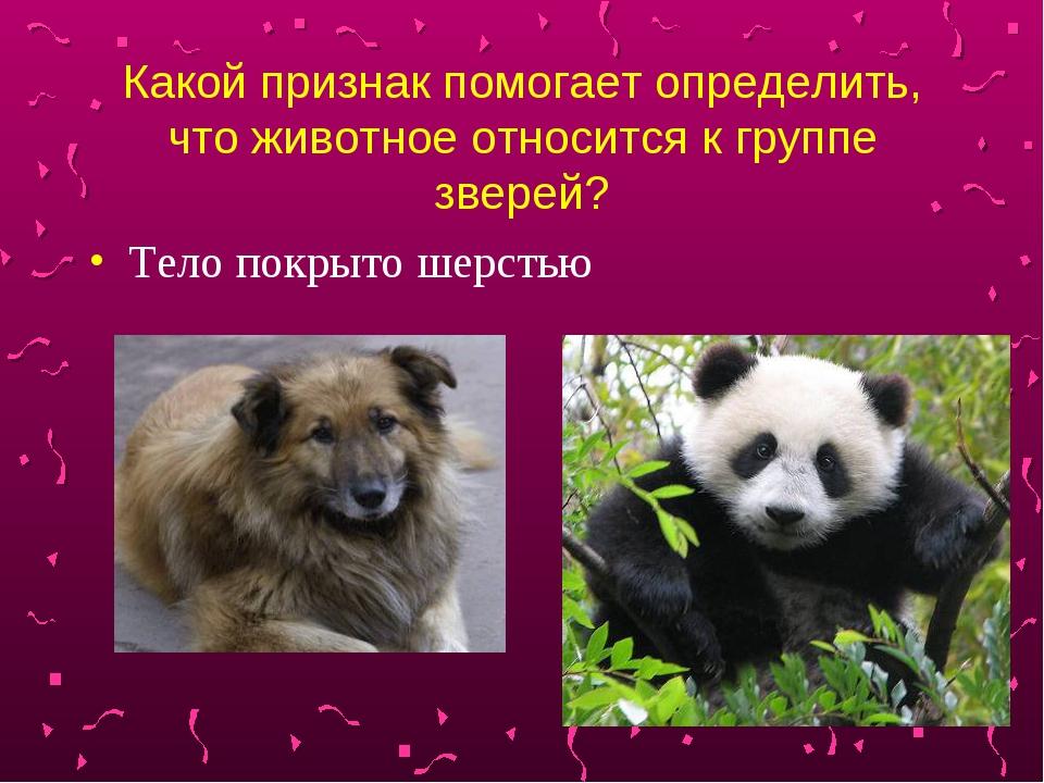 Какой признак помогает определить, что животное относится к группе зверей? Те...