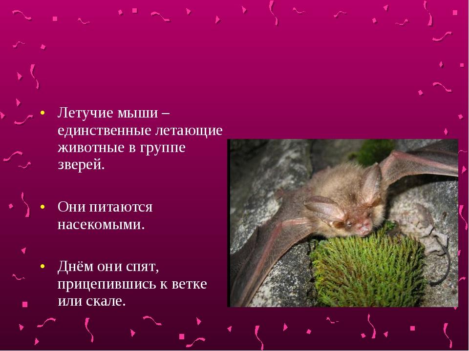 Летучие мыши – единственные летающие животные в группе зверей. Они питаются н...