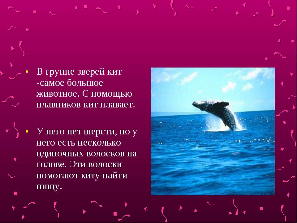 В группе зверей кит -самое большое животное. С помощью плавников кит плавает....