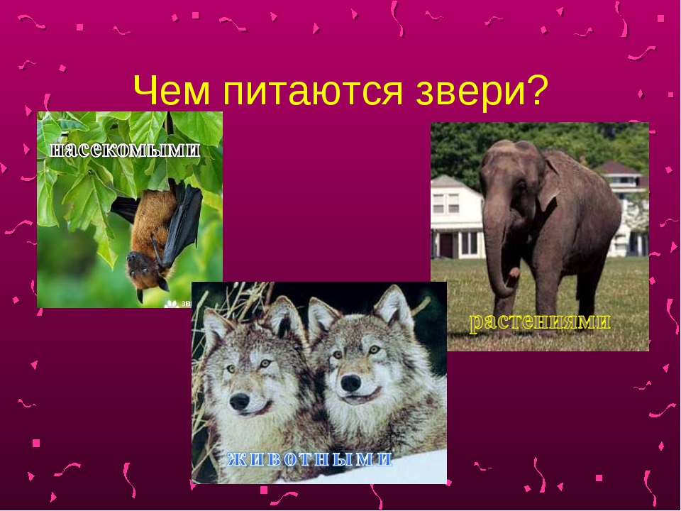 Чем питаются звери?