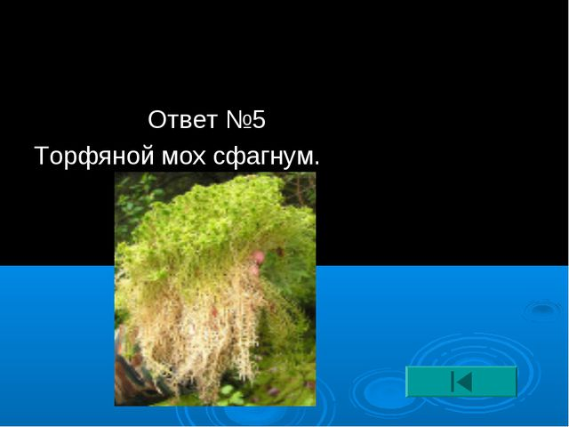 Ответ №5 Торфяной мох сфагнум.