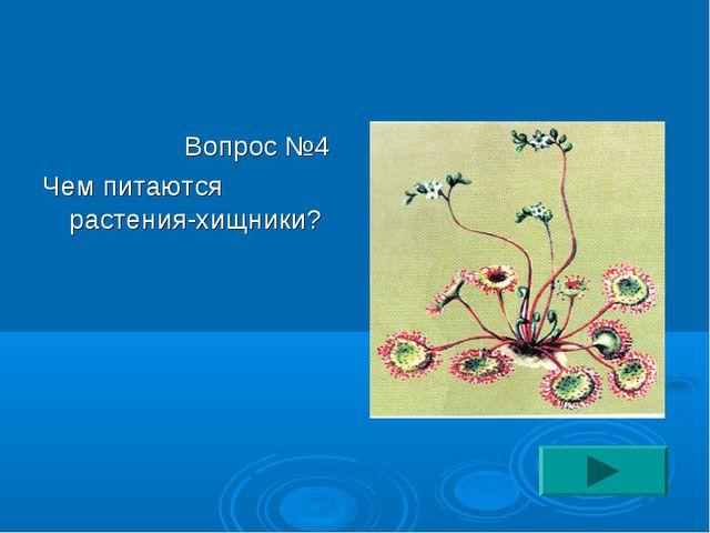 Вопрос №4 Чем питаются растения-хищники?