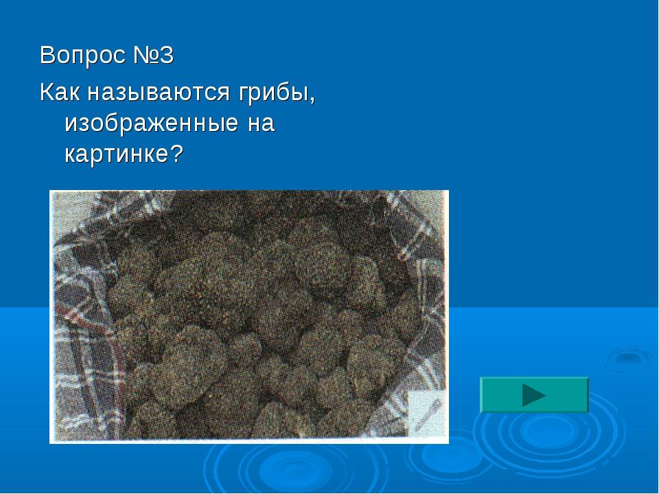 Вопрос №3 Как называются грибы, изображенные на картинке?
