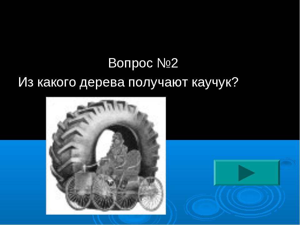 Вопрос №2 Из какого дерева получают каучук?