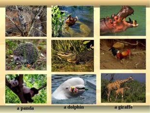 a lynx a duck a hippo a crocodile a cockerel a panda a dolphin a giraffe a he