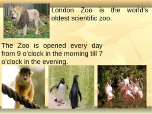 The Zoo is opened every day from 9 o'clock in the morning till 7 o'clock in t