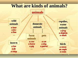 What are kinds of animals? insects birds pets farm animals reptiles,water ani